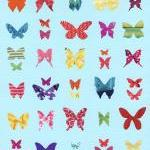 Butterfly Sampler - Art Print - 10 x 8